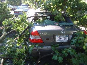 Tree in Car
